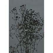 大地農園 プリザーブドフラワー カスミソウ かすみ草 ソフトミニカスミ草(ラメ付) 黒ラメ