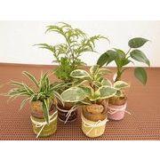 グラスレザーウェア ミニ観葉植物/観葉植物/モダン/インテリア/寄せ植え/ガーデニング