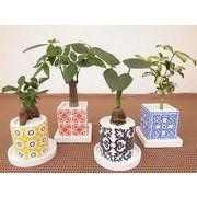 トルコタイルカラーウェア皿付 12 ミニ観葉植物/観葉植物/モダン/インテリア/寄せ植え/ガーデニング