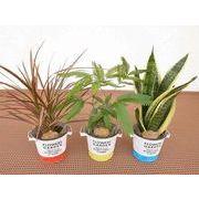 ツートンブリキウェアM ミニ観葉植物/観葉植物/モダン/インテリア/寄せ植え/ガーデニング