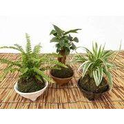 こけ玉皿付 ミニ観葉植物/観葉植物/モダン/インテリア/寄せ植え/ガーデニング