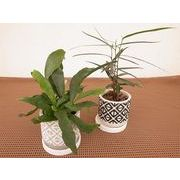 ジオメトリーウェア皿付 ミニ観葉植物/観葉植物/モダン/インテリア/寄せ植え/ガーデニング
