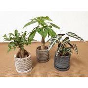 プレリーウェア皿付 ミニ観葉植物/観葉植物/モダン/インテリア/寄せ植え/ガーデニング