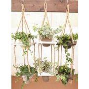 ハンギングウッドW ミニ観葉植物/観葉植物/モダン/インテリア/寄せ植え/ガーデニング