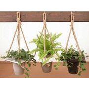 ハンギングウッドM ミニ観葉植物/観葉植物/モダン/インテリア/寄せ植え/ガーデニング