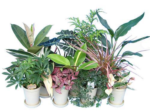 ロングポットアソート ミニ観葉植物/観葉植物/モダン/インテリア/寄せ植え/ガーデニング