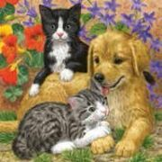Maki ペーパーナプキン <犬×猫>