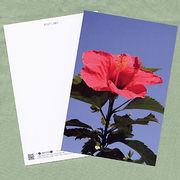 花のポストカード ハイビスカス