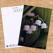 花のポストカード スズラン
