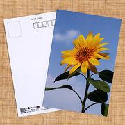 花のポストカード ヒマワリ
