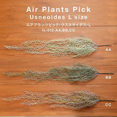 お部屋をグッと華やかに枯れない植物で作る手軽な癒し空間【エアプランツピック・ウスネオイデス・L】