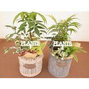 バンドルバスケ寄せ ミニ観葉植物/観葉植物/モダン/インテリア/寄せ植え/ガーデニング