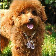 キーホルダー 犬柄 愛犬 車のキーホルダー ギフト キー シュナウザー ペット犬