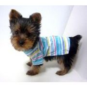 【即納】犬服 着脱簡単 カラフルTシャツ 全2色 6サイズ展開