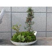 ◇ガーデニング雑貨◇【園芸用品】インドネシア天然石 ミニ盆栽鉢