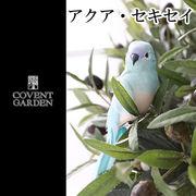 ■コベントガーデン■ アクア・セキセイ