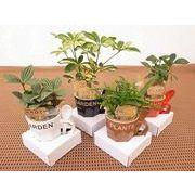マグスプーンM ミニ観葉植物/観葉植物/モダン/インテリア/寄せ植え/ガーデニング
