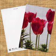 花のポストカード チューリップ