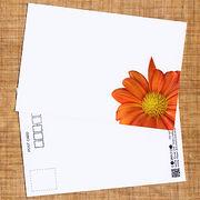 花のポストカード スプレーギク( オレンジ、インクジェット紙)