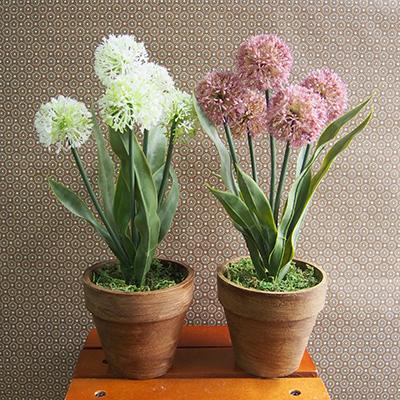 お部屋をグッと華やかに枯れない植物で作る手軽な癒し空間【フラワーポット・オニオンフラワー】