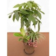 バイオマスウェア寄せ皿付 ミニ観葉植物/観葉植物/モダン/インテリア/寄せ植え/ガーデニング