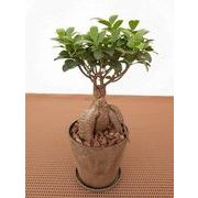 バイオマスウェア皿付 ミニ観葉植物/観葉植物/モダン/インテリア/寄せ植え/ガーデニング