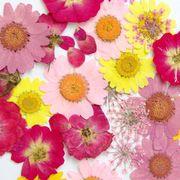 押し花セット【B】ピンク系