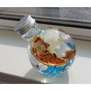夏のハーバリウム貝とガラス ネコ瓶