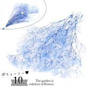 【ドライフラワー】大束ボリューム 10g グラデーションカスミ草《ブルー&ホワイト》【当店オリジナル】